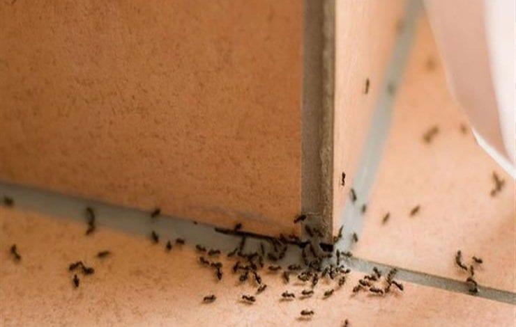 صندوق النمل
